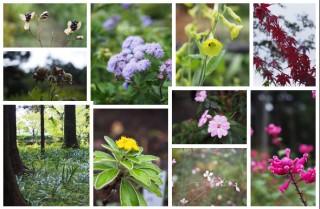 秩父宮記念公園 花々
