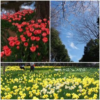 201704昭和記念公園(弥生台教室カメラ講座)3