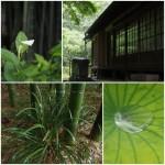 戸塚・畠中講座6/28撮影分2