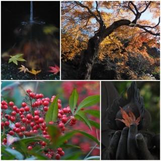 鎌倉瑞泉寺で撮影会(弥生台カメラ講座)1