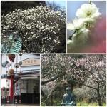 カ201803メラ講座撮影会(弥生台教室)1