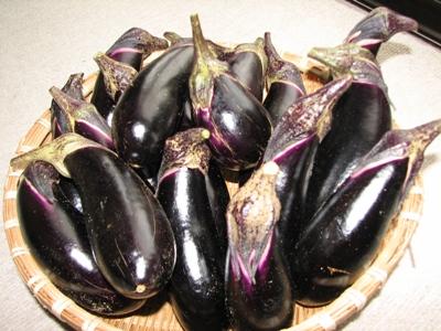採れ採れの茄子たち